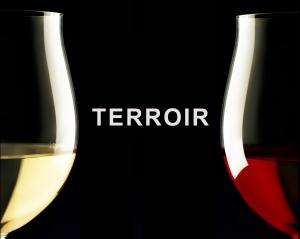 Τρίτη 13 Ιανουαρίου στις 9μμ Βραδιά Οινικής Μαθητείας: «Η έννοια του terroir».